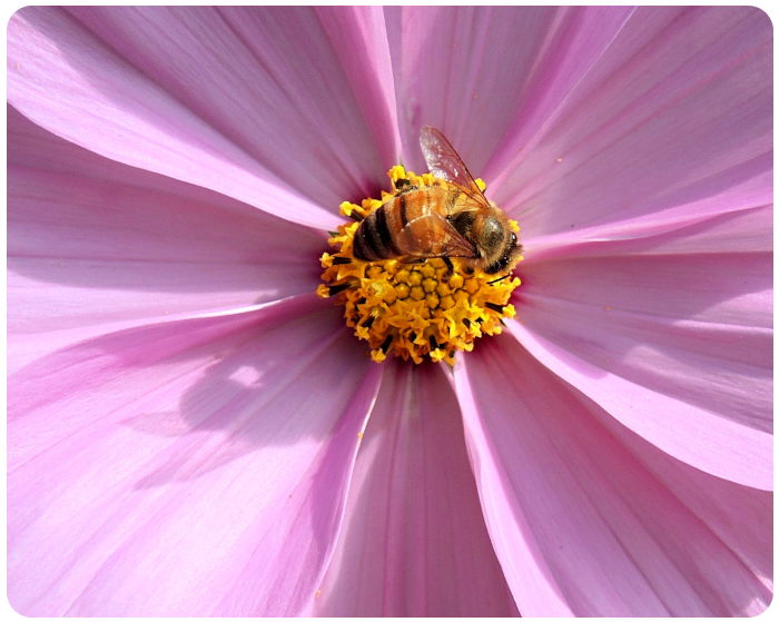 bee on a wildflower - click on image to return