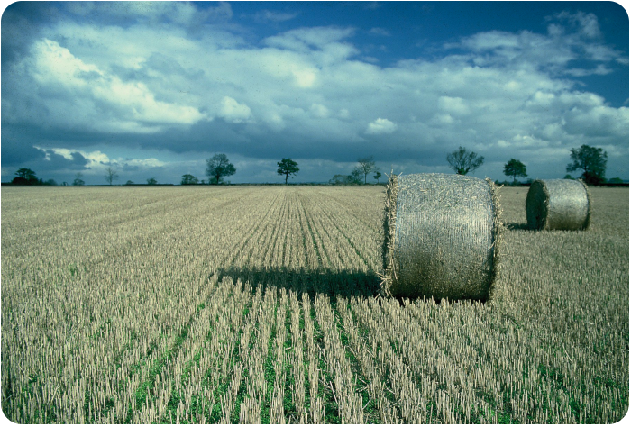 hay bales, UK - click on image to return